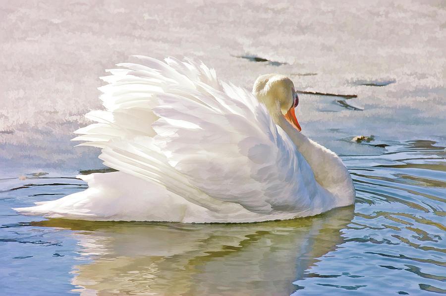 white-swan.jpg
