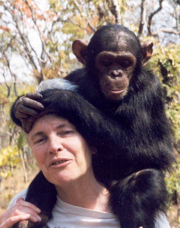 A chimpanzee friend in Zambia