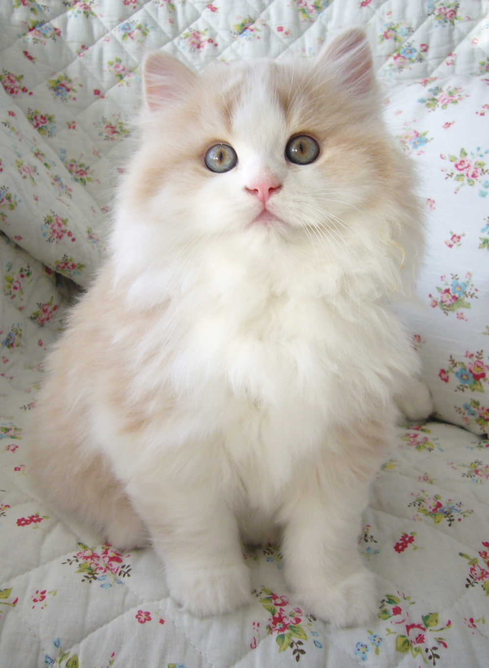 Cute & Classic Sir Didymus