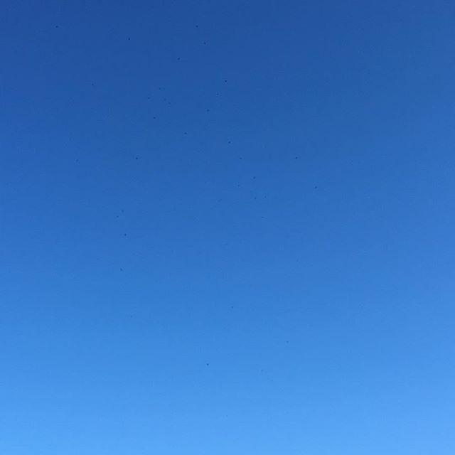 Nemmeno una nuvola su Firenze. Direzione @artigianatoepalazzo ... non vedo l'ora di andare a salutare @marchesidisangiuliano, ovvero le marmellate più buone da qui alla via lattea...