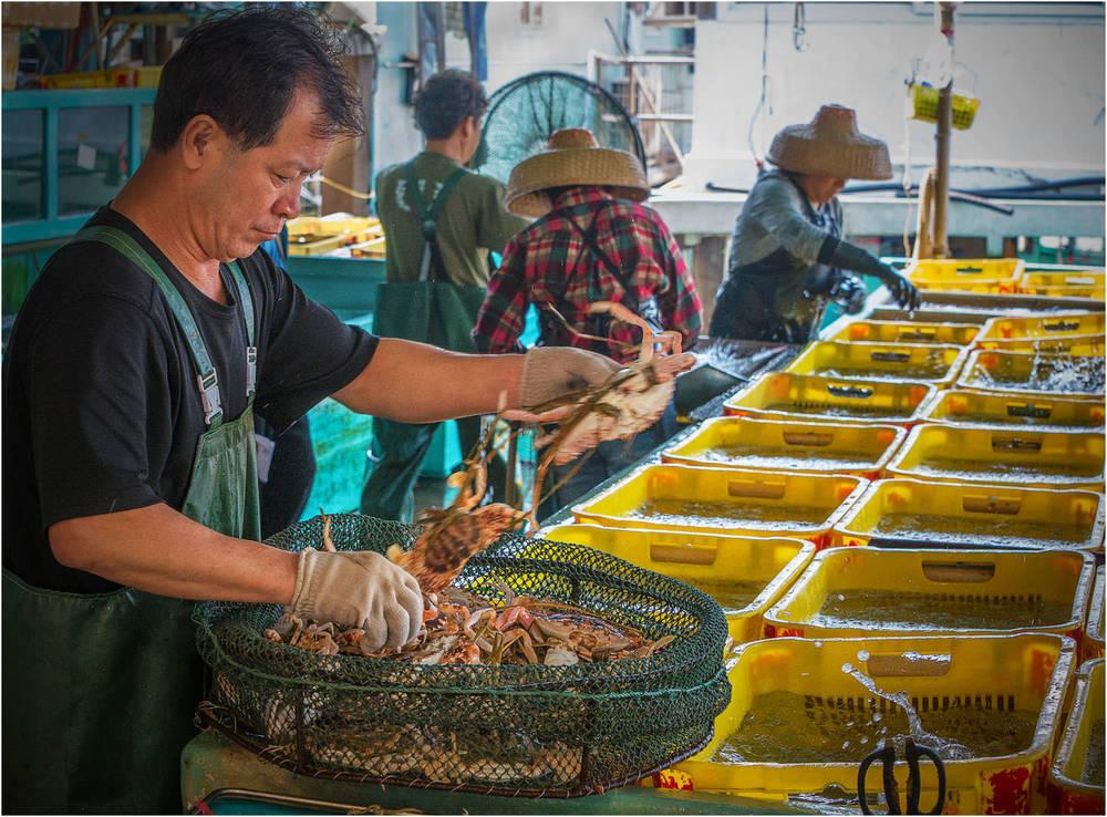 The Seafood Sorter