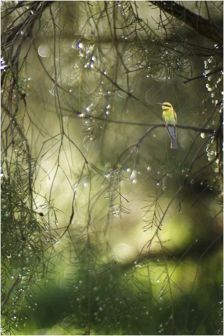 Dreaming Bird