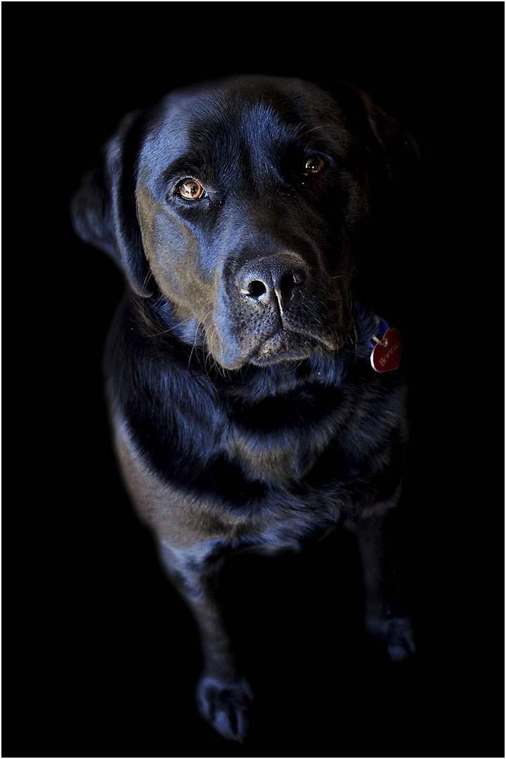 Black Dog Bonnie
