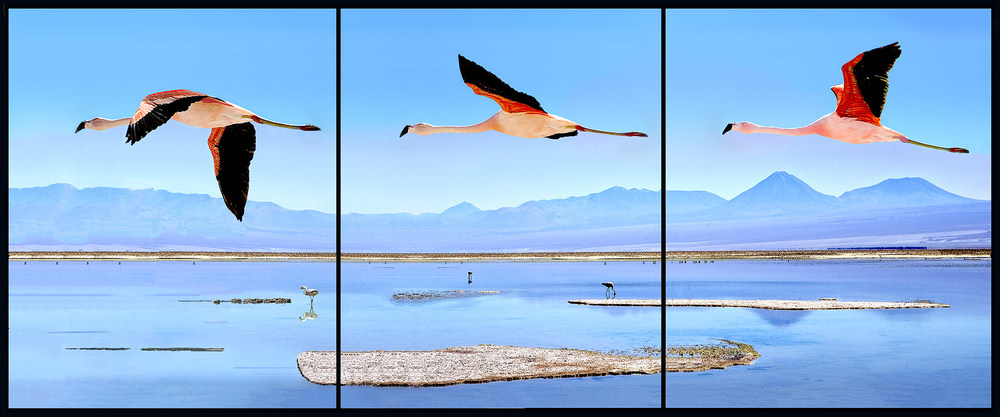 Flamingos in the Atacama