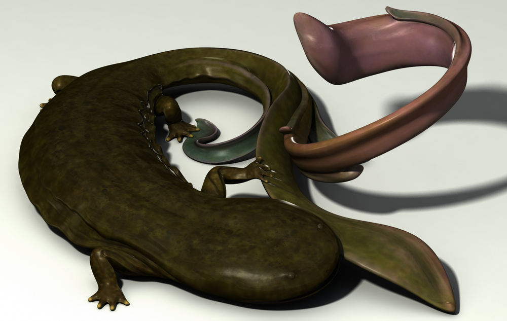 Florid Hellbender Salamander. Used Maya for base mesh and ZBrush for sculpting and texture painting. More about this project  here .