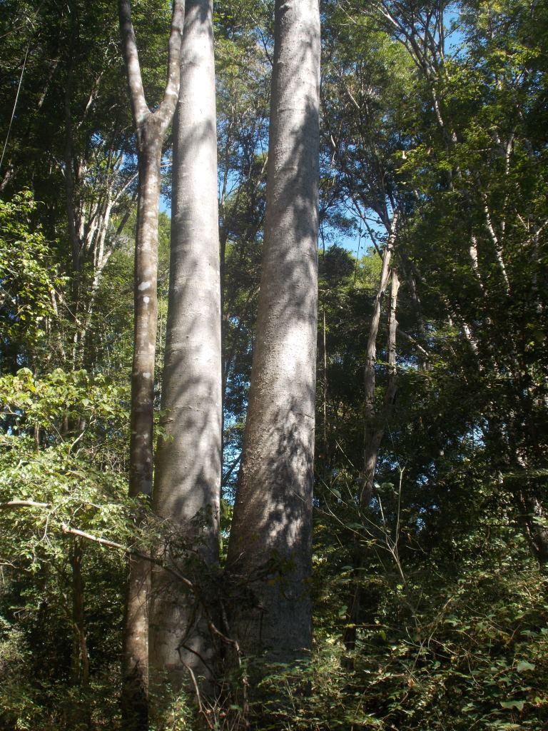 galerie forest3.JPG