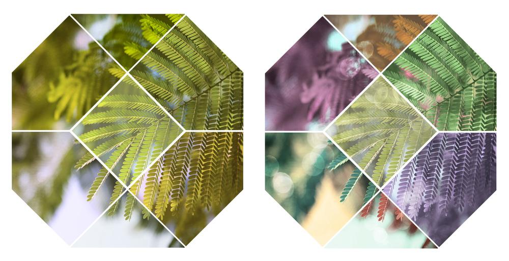 geometric_leaf_dyptic.jpg