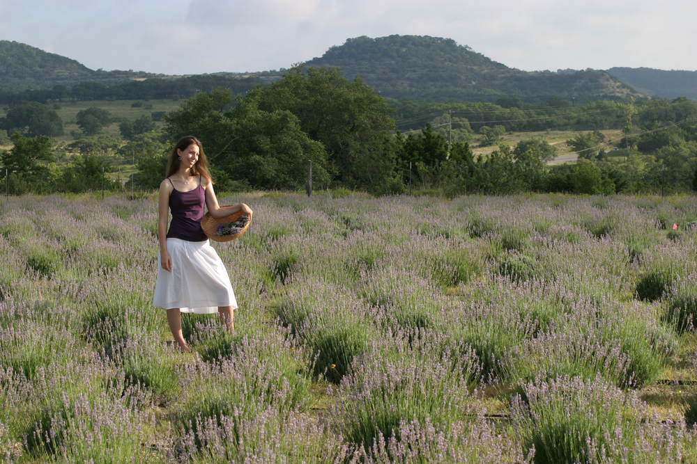 HillCountryLavenderField