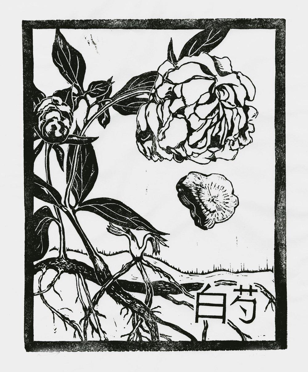 Baishao, linoleum print by Maria Hicks.