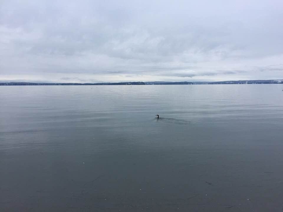 Mutiny Bay (Whidbey Island) on Dec. 25, 2017