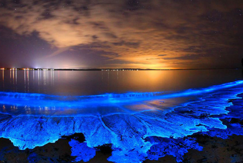 bioluminescence.jpg
