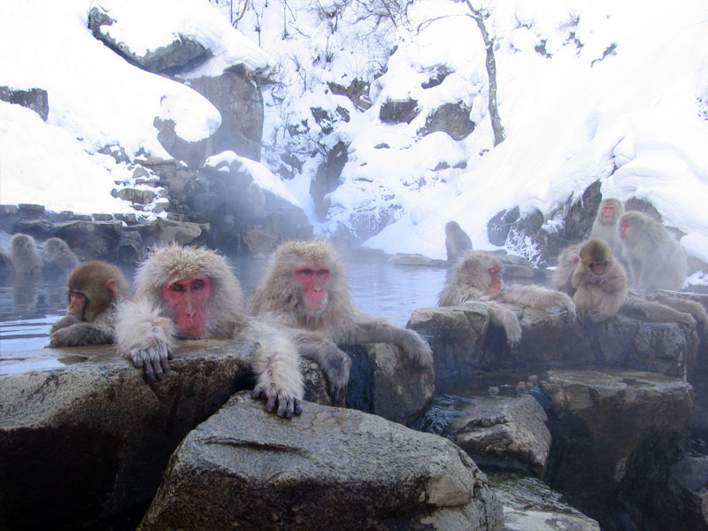 monkeys_hotsprings.jpg
