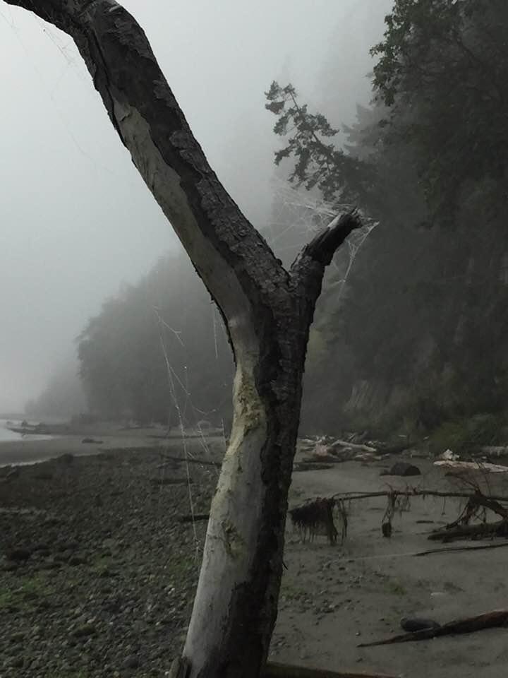 treewithcobweb.jpg