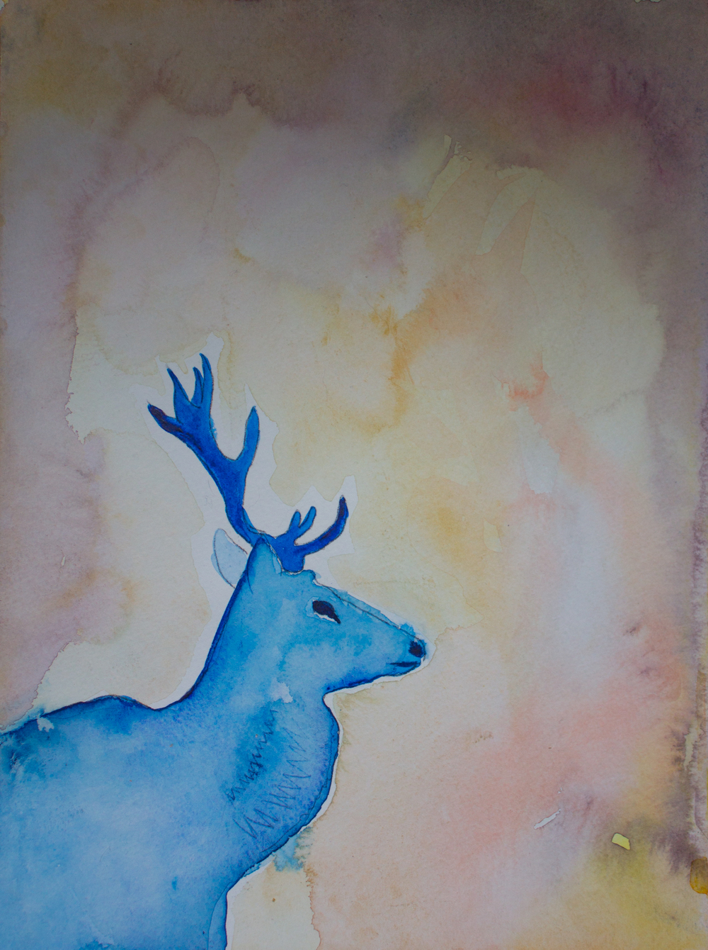 deerwatercolor_elanatenner.jpg