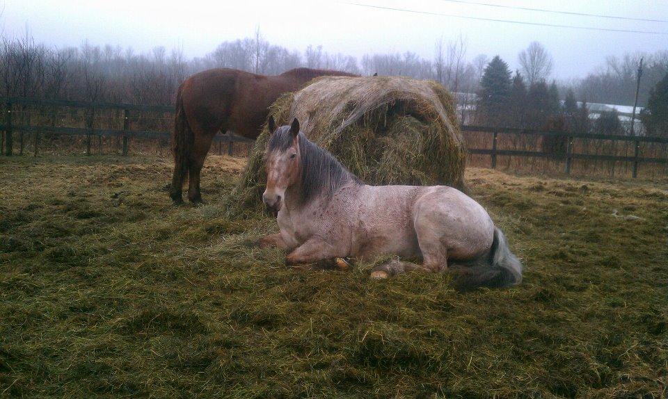 My Hay