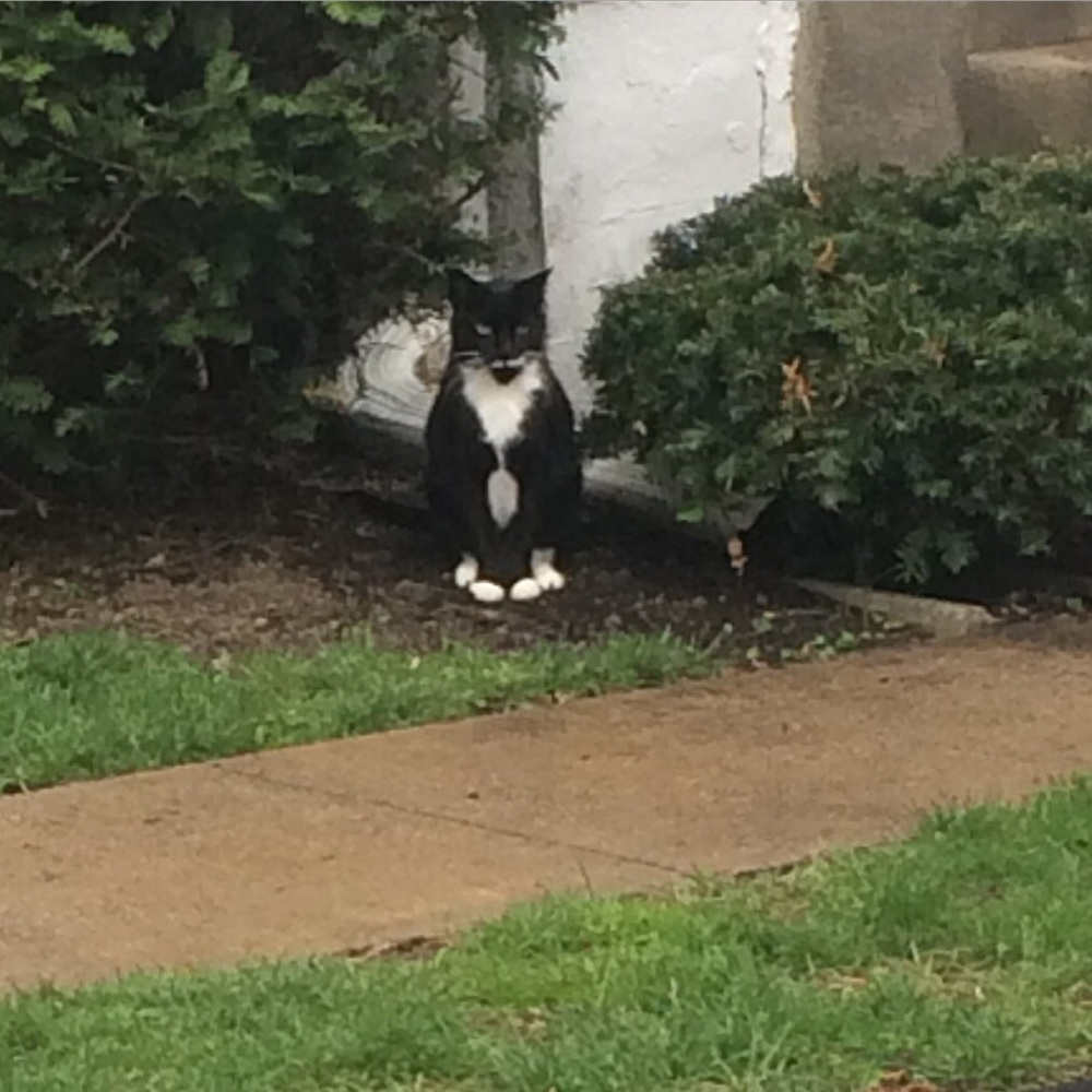 Who are you?! And why is our neighborhood a cat's paradise?!