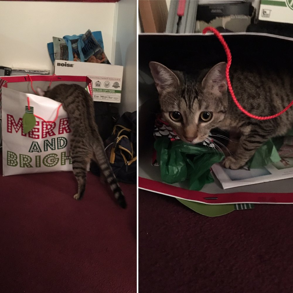 Before annnd after the bag fell on her.