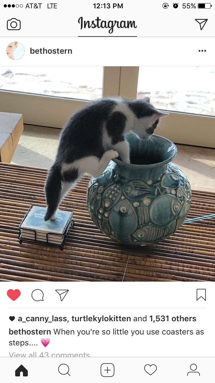 A tiny kitten using coasters as steps to climb into a vase. GAHHH I CAN'T EVEN WITCHU. 💖💖💖