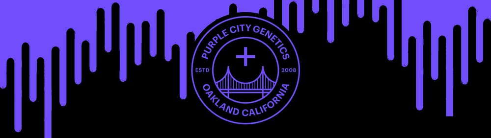 Purple City 7.jpg