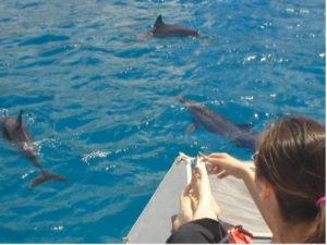 dolphin-300x225.jpg