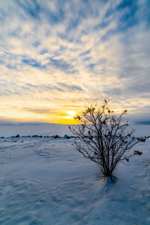 treefroze.jpg