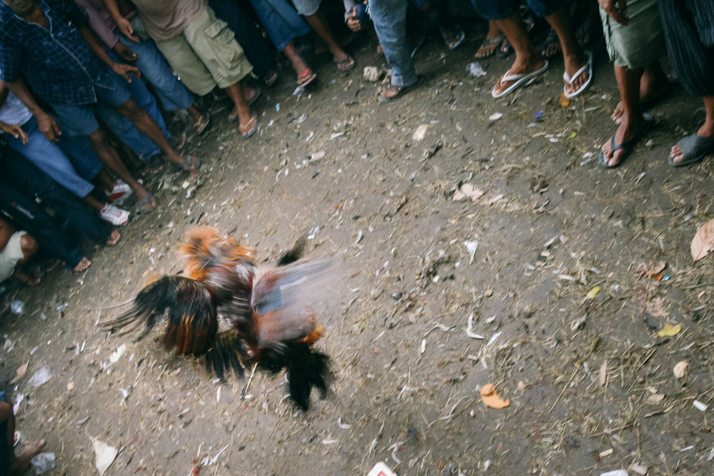 Men gather around a cockfight in Bali, Indonesia