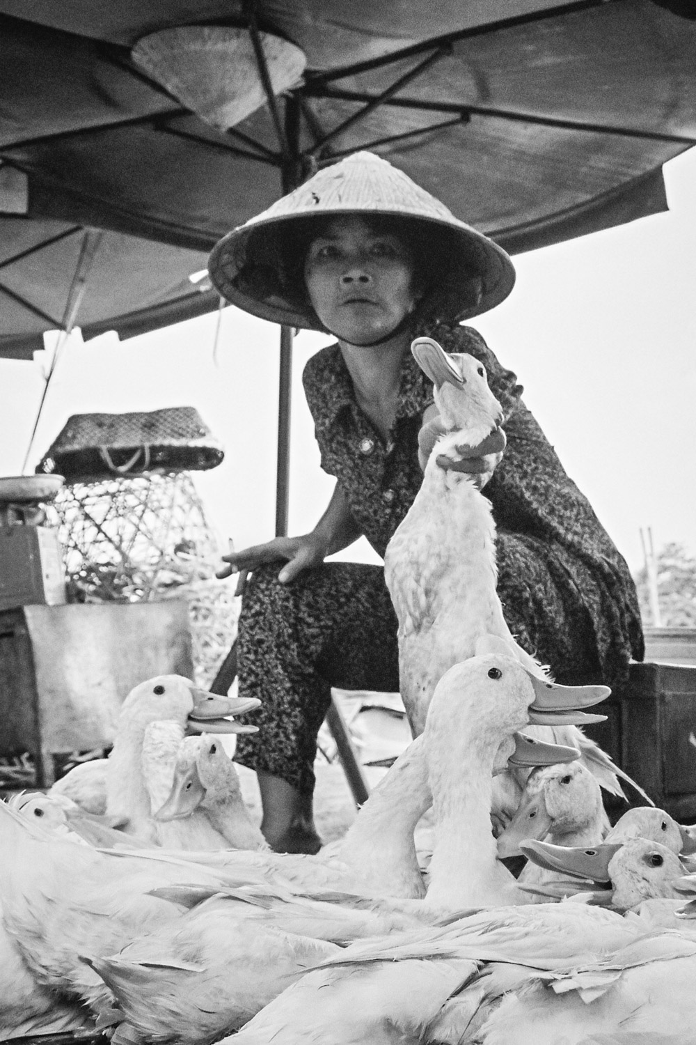 A woman grabs a duck by the neck at a market in Vietnam. Photo by Daniel J. Powell