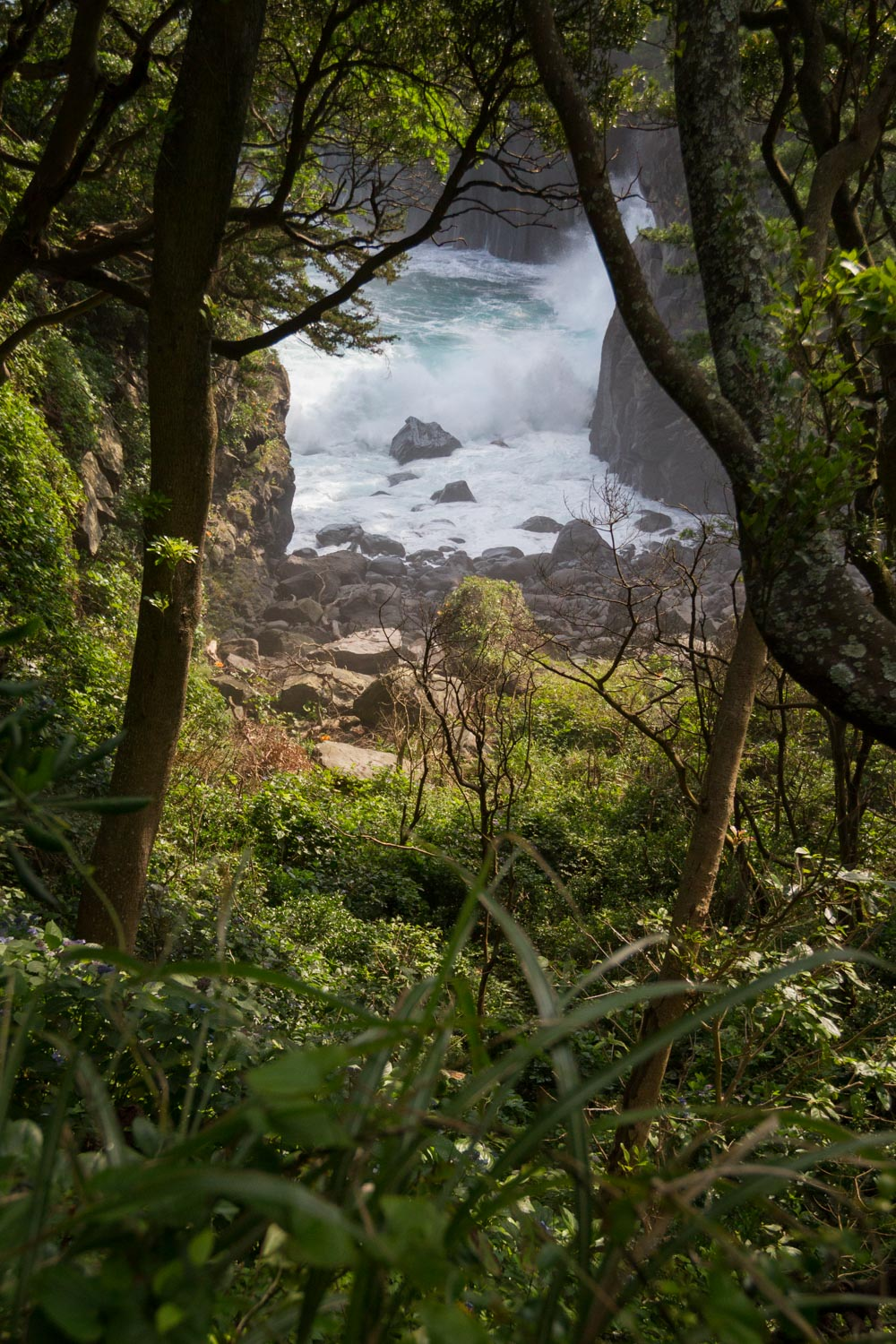 Ocean waves crash against a forested cove along Japan's Izu Peninsula coast. Photo by Daniel J. Powell
