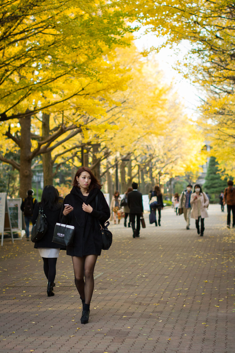 A young woman walks under golden ginkgo trees during autumn on the Aoyama Gakuin campus in Tokyo, Japan