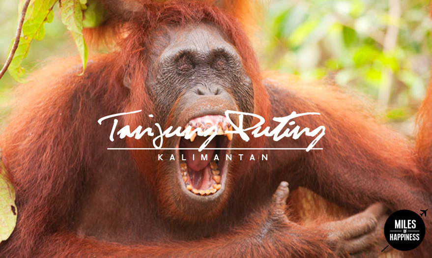 Indonesia_TanjungPuting_2.jpg