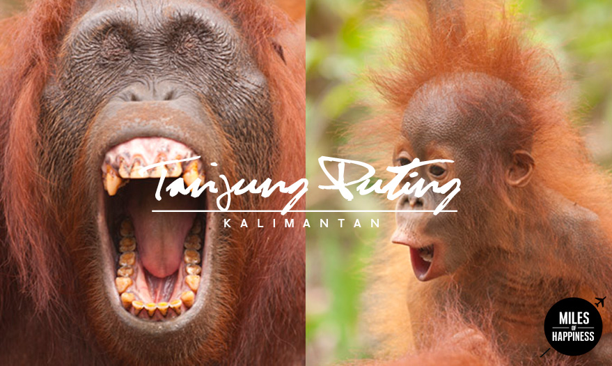 Indonesia_TanjungPuting_4.jpg