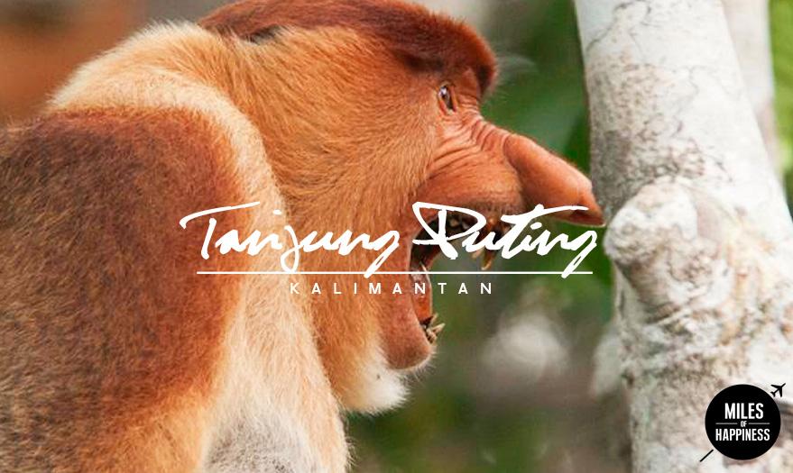 Indonesia_TanjungPuting_6.jpg