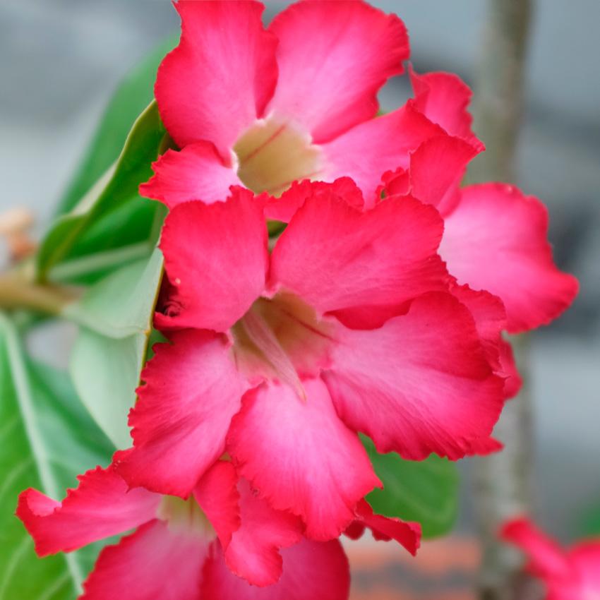 Uluwatu-Flower.jpg