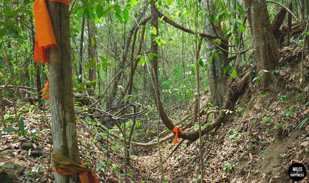 Wat-Pha-Lat-Jungle.jpg