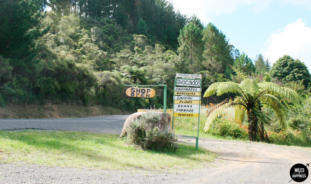 New Zealand: Itinerary of a road trip in the Coromandel Peninsula