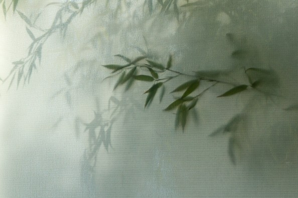 bamboo by Kimberly Poppe