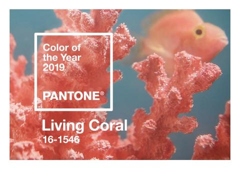 livingcoral.jpeg