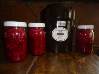 For a recipe to make your own gut healthy sauerkraut, click here.