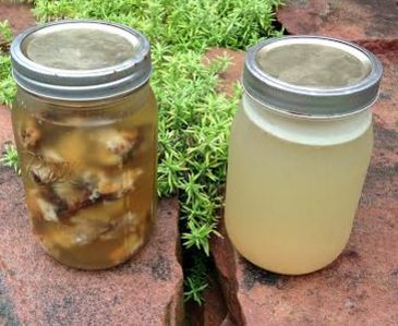 Jar one: bones soaking in apple cider vinegar  Jar two: finished bone broth