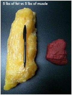 5 lb fat vs 5 lbs muscle.jpg
