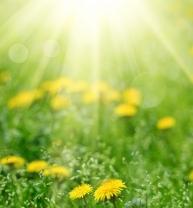 dandelion & sun.jpg