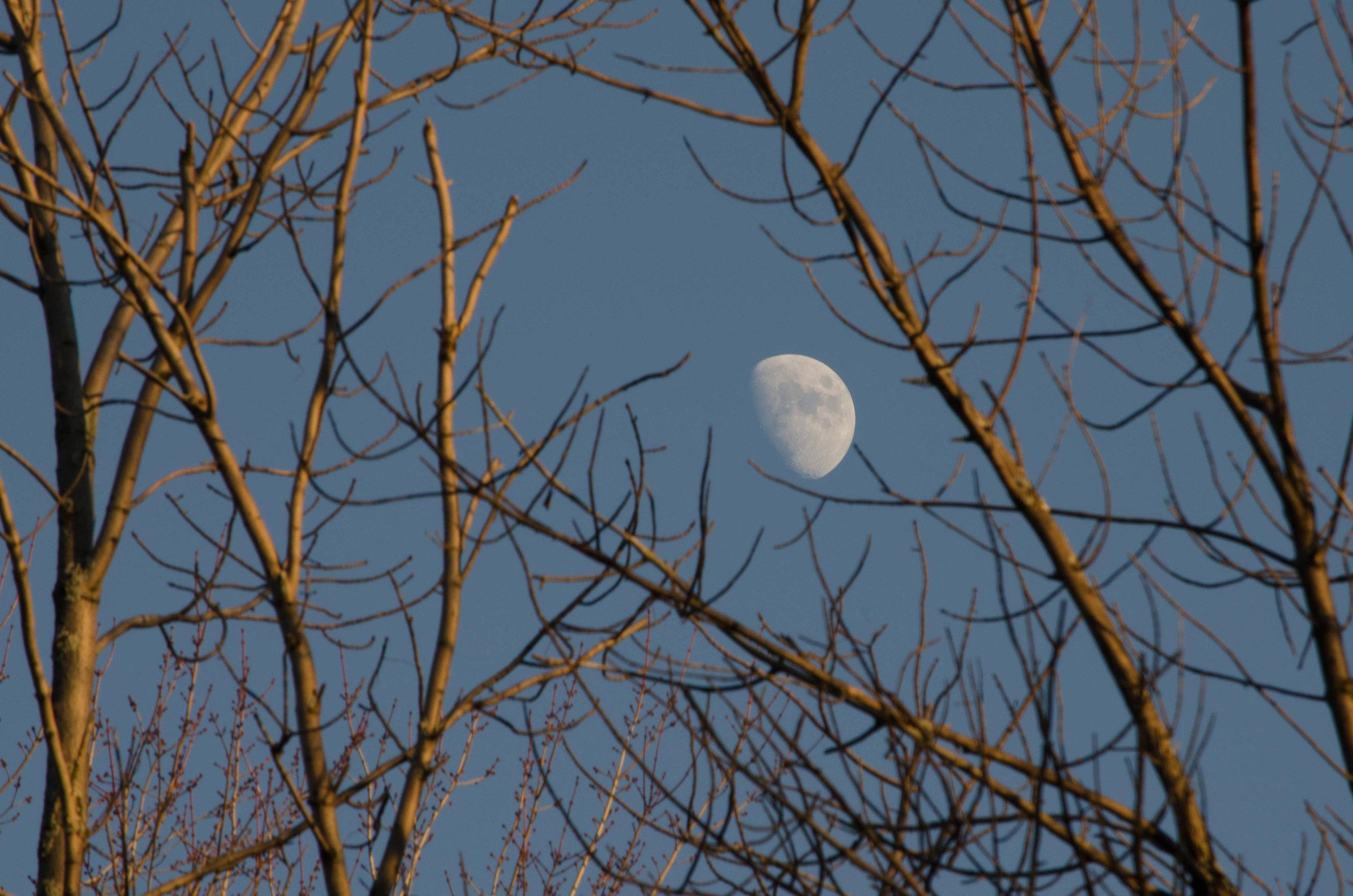 Moon Charlene Dumas
