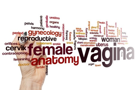 vagina & female reproductive WORDS
