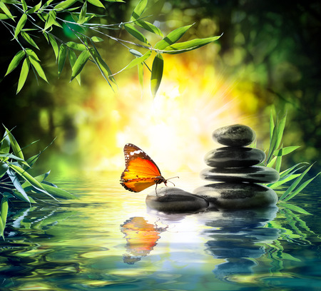 27847872 - delicate concept - butterfly on water in garden