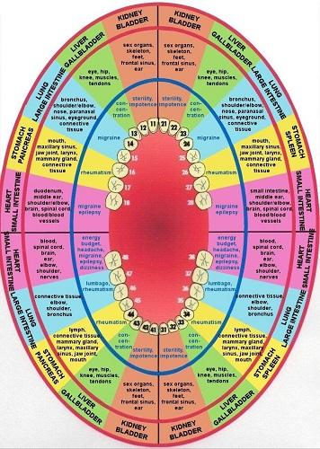 tooth meridian chart 2 small.jpg