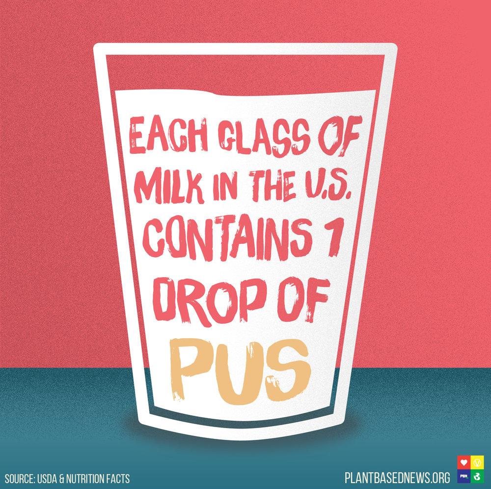 Dairy Pus Square.jpg
