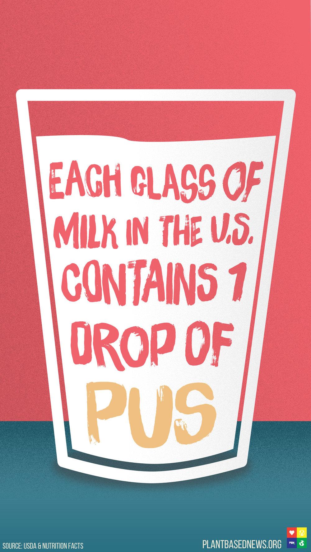 Dairy Pus Portrait.jpg