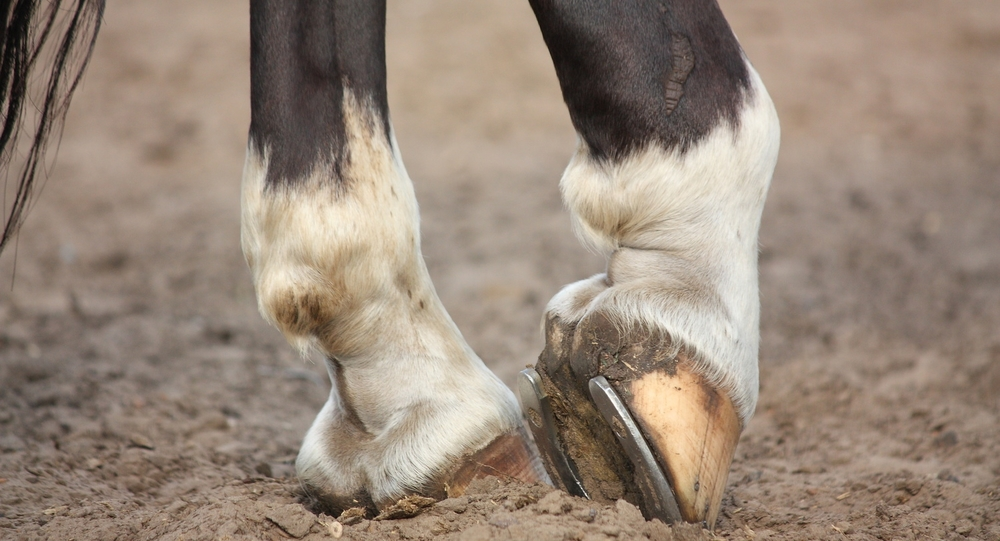 Hoof care for your Broodmare