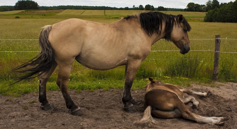 Feeding Sick or Injured Horses