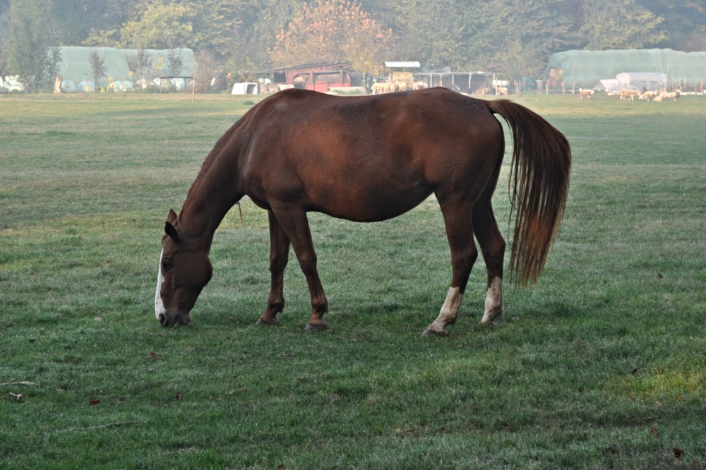 Broodmare Nutrition: Now or Never